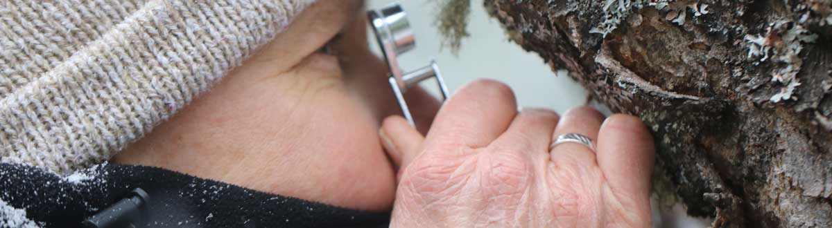 A person inspecting the bark of a tree with a small magnifying glass