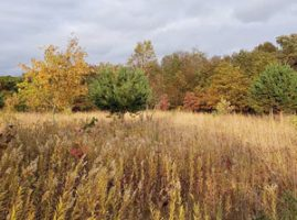 Image of a Fall prairie plant habitat at Welty Center with trees and tall grasses.