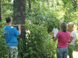 Master Naturalists taking measurements of a tree