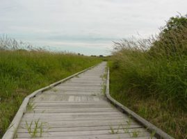 boardwalk habitat at park
