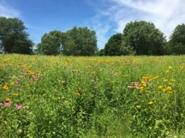 Summer prairie plants in bloom at Retzer Nature Center on a sunny day