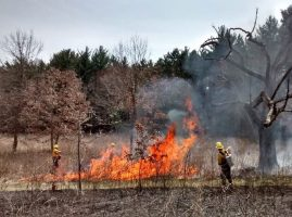 image of prescribed burn for habitat maintenance at UW Arboretum, two volunteers are tending to the fire