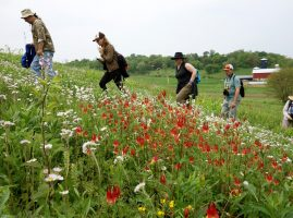 Image of Master Naturalists hiking up a prairie hill to identify blooming plants