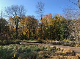 image shows boardwalk winding through wetland habitat at Schlitz Audubon Nature Center